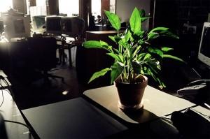 Indoor Office Plant