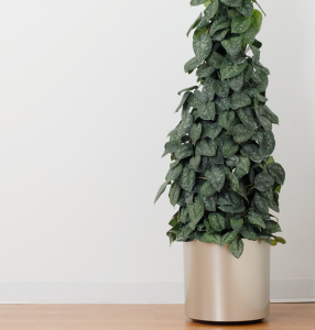 Cleaning Air with Indoor Plants | NewPro Blog
