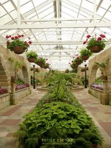 Beautiful Greenhouse 225x300 25 Beautiful Indoor Plant Design Images
