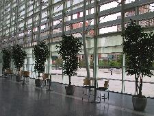 Big Indoor Plants More Plants, Happier Employees