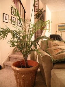 Dramatic Residential 225x300 25 Beautiful Indoor Plant Design Images