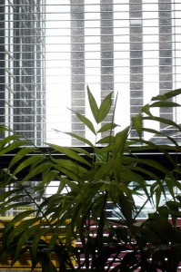 Rainy Window 199x300 25 Beautiful Indoor Plant Design Images