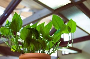 Sunlight Green 300x199 25 Beautiful Indoor Plant Design Images