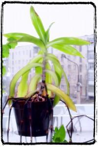 Window Plant 200x300 25 Beautiful Indoor Plant Design Images