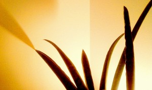 Yellow Shadow 300x178 25 Beautiful Indoor Plant Design Images