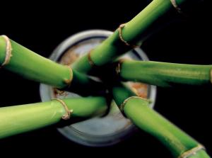 bamboo 300x223 25 Beautiful Indoor Plant Design Images