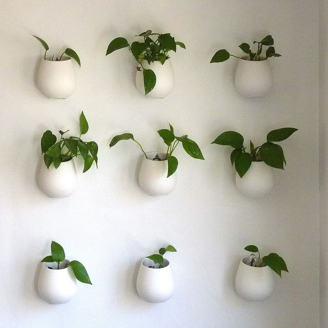 everything you need to know about pothos plants newpro blog. Black Bedroom Furniture Sets. Home Design Ideas