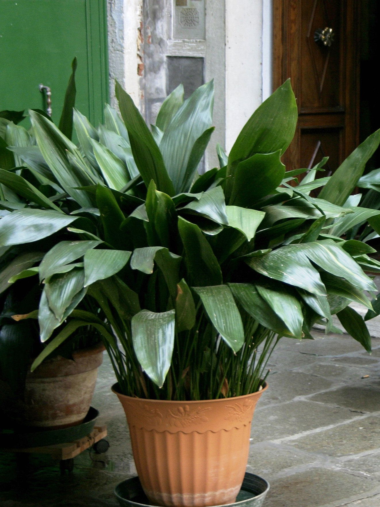 3 easy indoor plants newpro blog