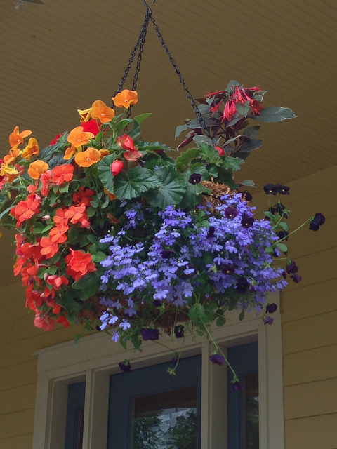 How To Use Lobelia In Spring Container Arrangements Newpro Blog