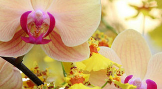 5 Tips for Healthier Orchid Arrangements Featured Image