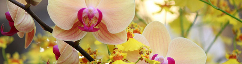5 tips for healthier orchid arrangements - featured image