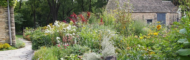 growing a cottage garden in containers - featured image
