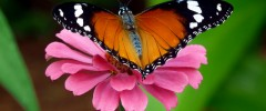 how to attract butterflies - featured image