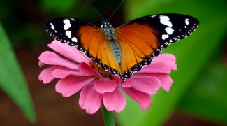 How To Attract Butterflies to Your Outdoor Containers Featured Image