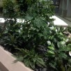 Docter's Interior Plantscaping
