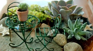 Fairy Gardens: A Small Trend in Interiorscaping? Featured Image