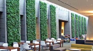 Living Green Walls and Maintenance: Tips for Interiorscapers Featured Image