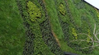 Three Plant Design Tips for Living Green Walls Featured Image