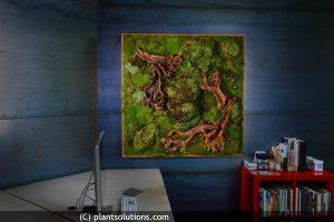 moss art walls