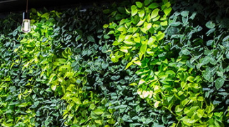 5 Pro Tips for Low Maintenance Indoor Living Walls Featured Image