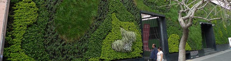 Mexico City Green Wall