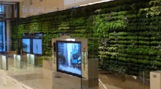 8 Irrigation Considerations for Soil-Based Living Walls Featured Image