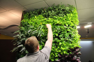 NatGeo Greenwall Maintenance - GSky Versa Wall