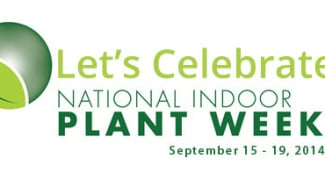 How Did You Celebrate National Indoor Plant Week? Featured Image