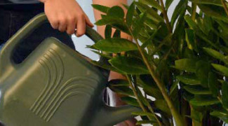 Professional Plant Care: More than Meets the Eye Featured Image