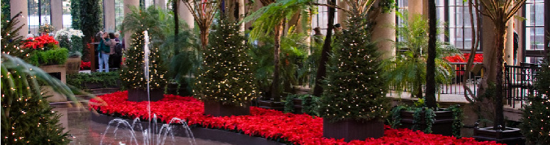 Poinsettia display