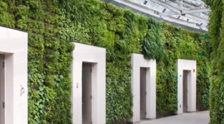 9 Earth-Friendly Living Wall Considerations Featured Image