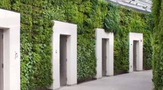 Living Wall Lighting Considerations and Trends Featured Image