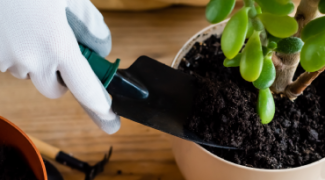 The Human Plant Relationship: Are Your Clients Killing Plants? Featured Image