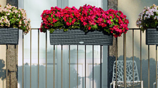 Window Boxes: They Aren't Just For Windows Featured Image