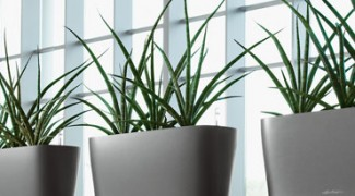 How to Promote Indoor Plants in Architectural Planning Featured Image