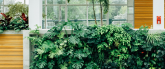 a green wall with natural accents as a competitive bid project