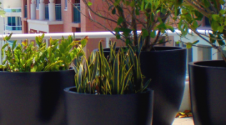 The Pros and Cons of Fiberglass Planters Featured Image