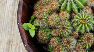 Horticultural Trash Talk: Interiorscape Surprises Featured Image