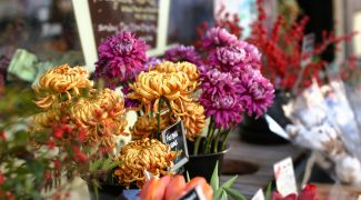 Flowers and Interiorscaping: What You Should Know Featured Image