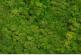 image of green grass reindeer moss