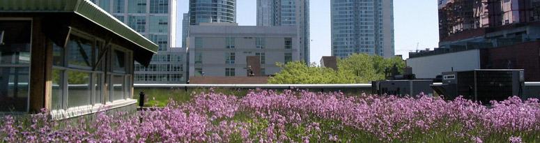 green roof biodiversity