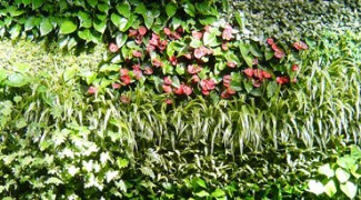 Living Wall Success Series – Part 1: Plants Clean The Air Featured Image
