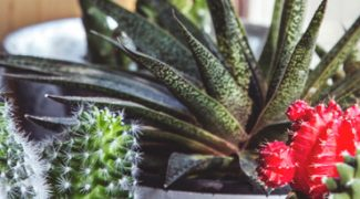 Six Popular Plant Care Myths Debunked Featured Image