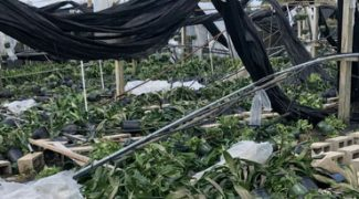 Help Florida Growers Rebuild Featured Image