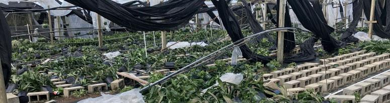 florida growers