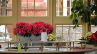 How to Enjoy the Holiday Season as an Interiorscaper Featured Image
