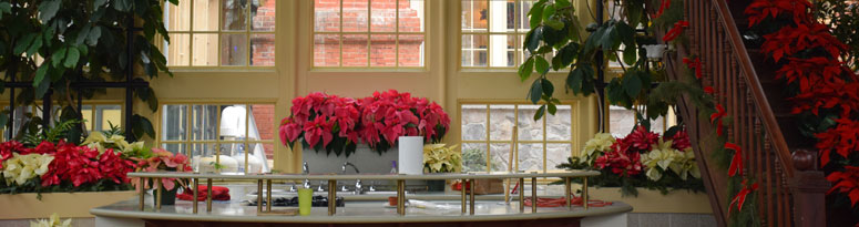 holiday interiorscape display
