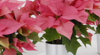 Refreshed Holiday Planter Ideas Featured Image