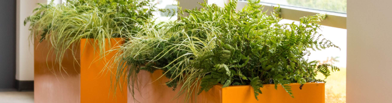 green leafy plants in orange rectangular planters near bright windows