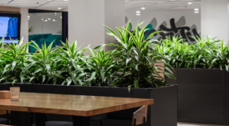 Reducing Office Noise with Sound Absorbing Indoor Plants Featured Image